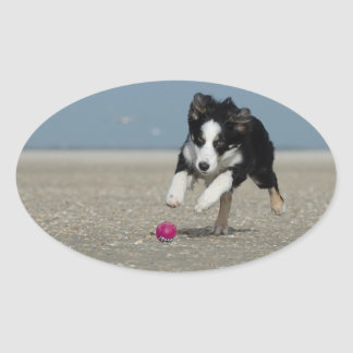 Border collie oval sticker