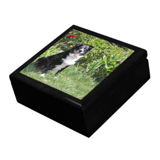 Border Collie - Paddy - Pasten Large Square Gift Box
