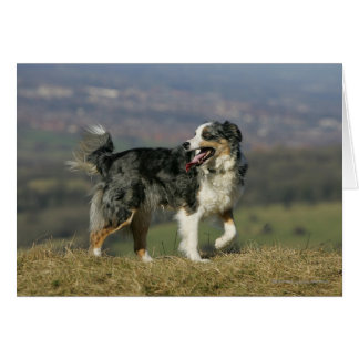 Border Collie Panting 2 Card