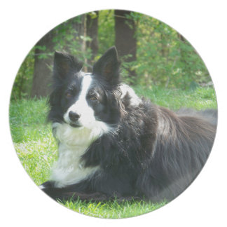 Border Collie Party Plates