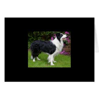 Border Collie Pet Dog Animal Cute Destiny Gift Card