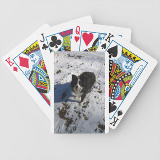 Border Collie photo on products Bicycle Playing Cards