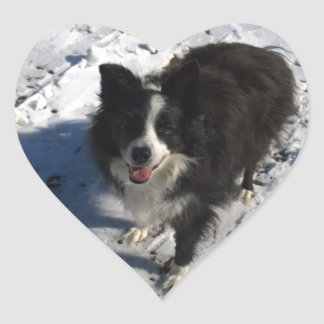 Border Collie photo on products Heart Sticker