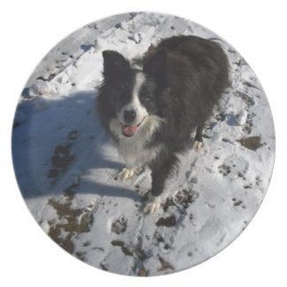 Border Collie photo on products Plate