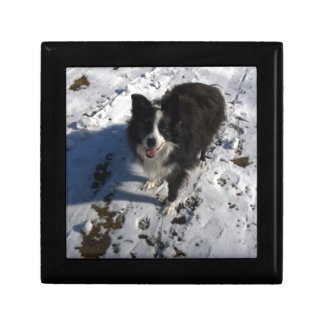 Border Collie photo on products Small Square Gift Box