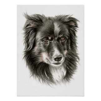 Border collie portrait II Poster