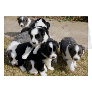 Border Collie Puppies Note Card
