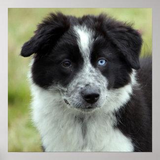 Border Collie puppy dog poster gift idea