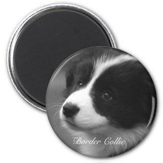 Border Collie puppy Magnet