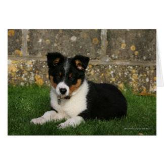 Border Collie Puppy with Leaf in Mouth Card
