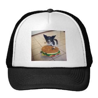BORDER COLLIE QUEENSLAND AUSTRALIA CAP