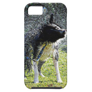 Border Collie Shaking Tough iPhone 5 Case