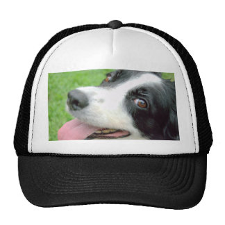 Border Collie Smile Cap
