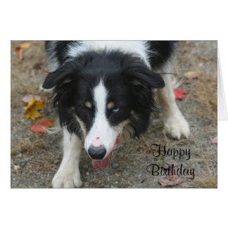 Border Collie Stare Dog Birthday Card