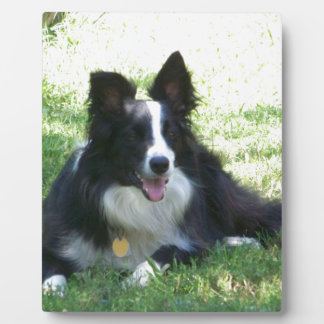 Border Collie Tshirts Plaque