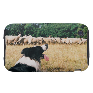 Border Collie Watching Sheep iPhone 3 Tough Cases