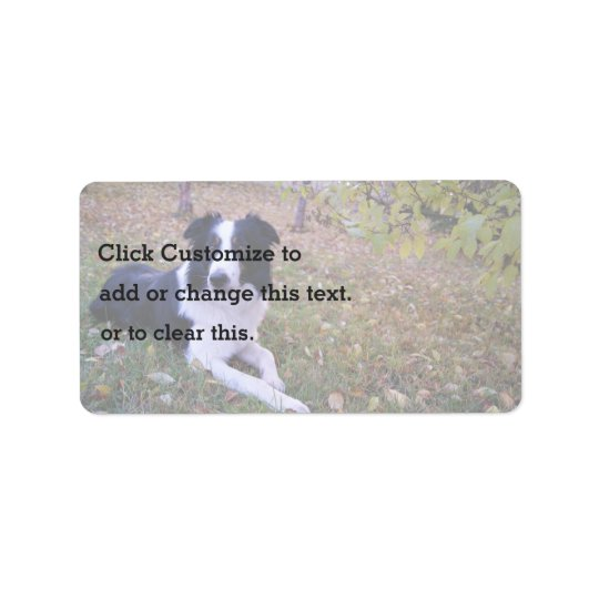 Border collie with autumn leaves label