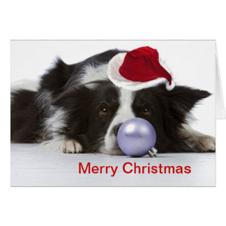 border collie with christmas hat cards