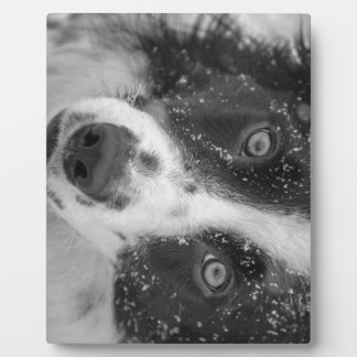 Border Collie's First Snow Plaques