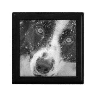 Border Collie's First Snow Small Square Gift Box