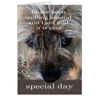 Border Terrier dog birthday card