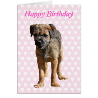 Border Terrier puppy dog, puppy birthday card