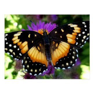 Bordered Patch Butterfly on Purple Aster Postcard