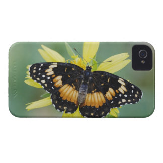 Bordered Patch, Chlosyne lacinia, adult on iPhone 4 Cover