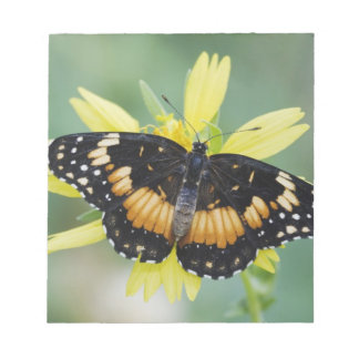 Bordered Patch, Chlosyne lacinia, adult on Memo Notepad