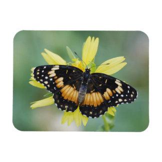 Bordered Patch, Chlosyne lacinia, adult on Rectangular Photo Magnet