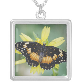 Bordered Patch, Chlosyne lacinia, adult on Square Pendant Necklace