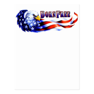 Born Free Bald Eagle And USA Flag Postcard
