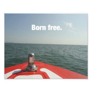 Born Free Photo Art