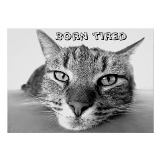 Born tired kitty poster