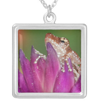 Borneo. Close-up of Cinnamon Ttree Frog. Credit Square Pendant Necklace