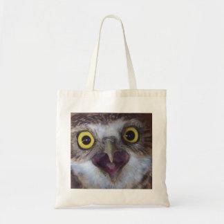 borrowing-owl-