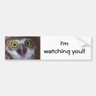 borrowing-owl- car bumper sticker
