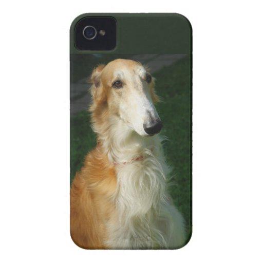 Borzoi dog beautiful photo blackberry bold case iPhone 4 cases