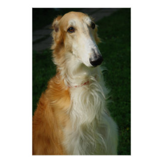 Borzoi dog beautiful photo poster print