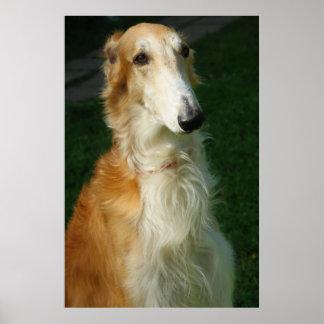 Borzoi dog beautiful photo poster, print