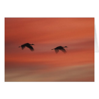Bosque del Apache Wildlife Refuge | New Mexico Card