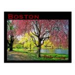 Boston Common Postcard - Customised