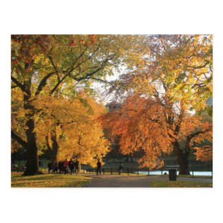 Boston Public Garden Autumn Postcard
