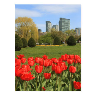 Boston Public Garden Tulips in Spring Postcard
