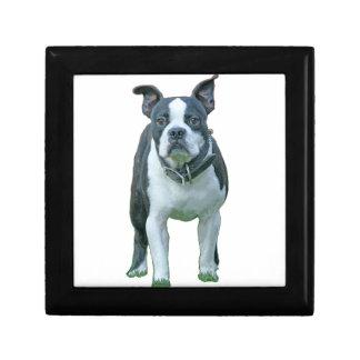 Boston terrier  1b gift box