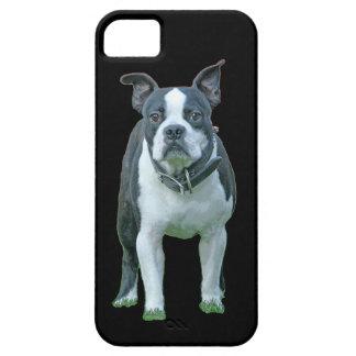 Boston terrier  1b iPhone 5 cases