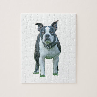Boston terrier  1b jigsaw puzzle