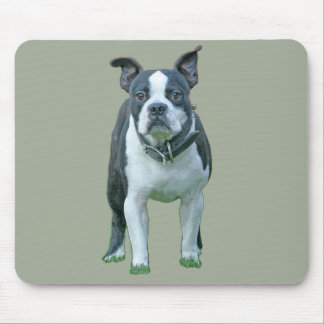 Boston terrier  1b mouse pad