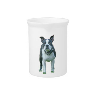 Boston terrier  1b pitcher