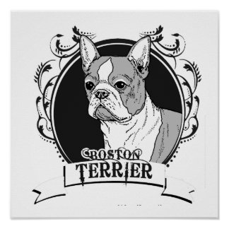 BOSTON TERRIER (2) POSTERS